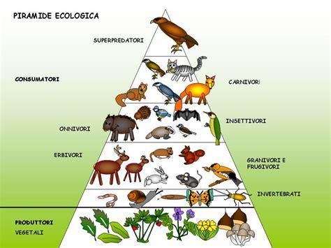 catena alimentare nel bosco catena alimentare bosco quadrocucina03