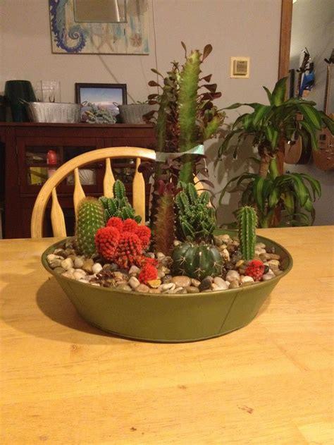 Indoor Cactus Garden Ideas Indoor Cactus Garden Ideas Www Pixshark Images Galleries With A Bite