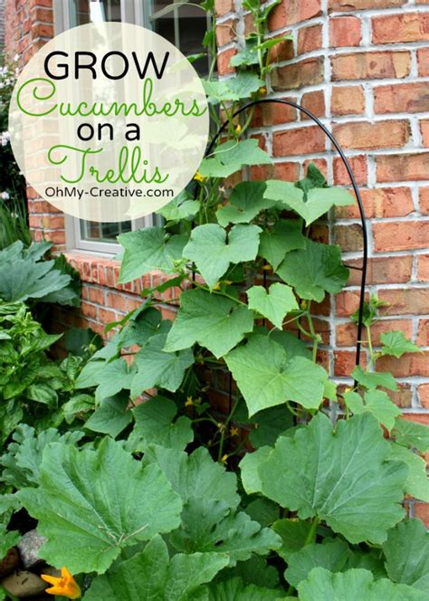 Small Plant Trellis small space gardening grow cucumbers on a trellis oh my creative