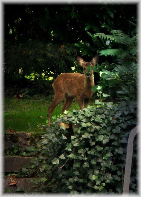 Deer Repellent For Gardens how to make deer repellent garden guides