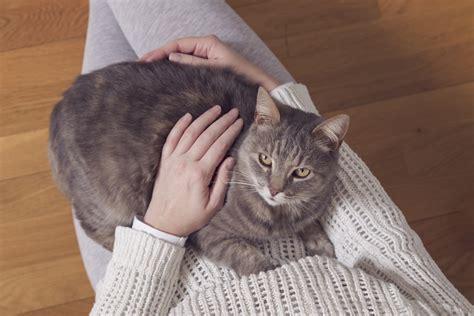 come tenere un gatto in casa come tenere un gatto