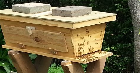 top bar hive pdf simple top bar hive plans 28 images top bar beehive plans free fl made by wood