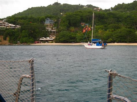 grenadines  island  bequia admiral bay   dogs life