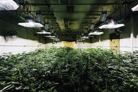 Long House Plans by How To Control The Cost Of Indoor Cannabis Growing