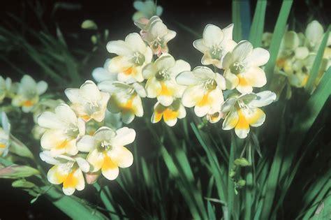 elenco fiori profumati giardini