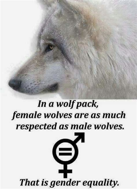 which side does st go on wolf tumblr