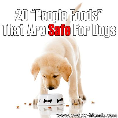 foods safe for dogs 20 foods that are considered safe for dogs lovable friends