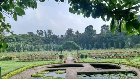 National Botanical Gardens центральная часть парка Picture Of National Botanical Garden Dhaka City Tripadvisor