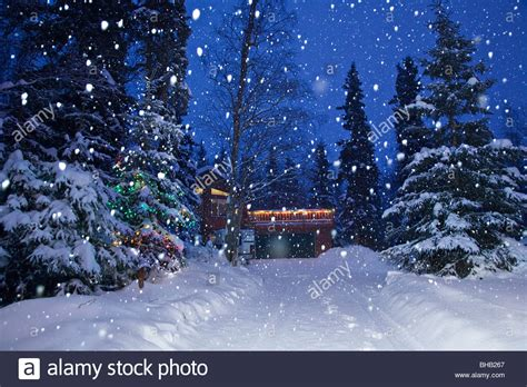 snowy alaskan cluster light tree snow falling on a lit tree beside a snow covered driveway stock photo royalty free