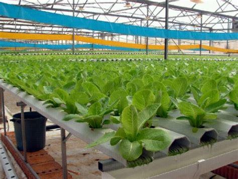 Harga Manifold Hidroponik 6 cara menanam secara sistem hidroponik budidaya tanaman