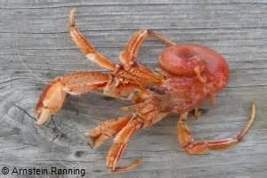 wildlife forever hermit crabs