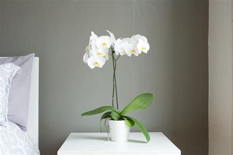 beautiful flowering houseplants