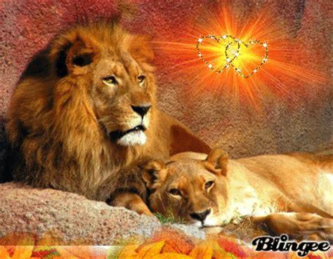 imagenes leones enamorados 15 im 225 genes de leones enamorados im 225 genes de enamorados