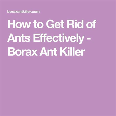 How To Get Rid Of Ants In Vegetable Garden by 17 Best Ideas About Borax Ants On Killing