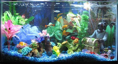 Neon Aquarium Decorations by 10 Gallon Fish Tank Neon Tetras Neon Tetra 10 Gallon