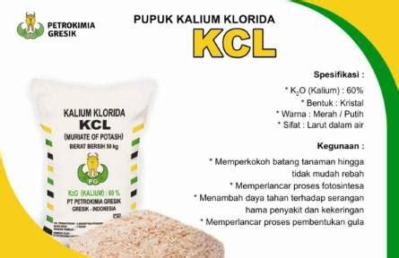 Pupuk Kalsium Yang Bagus 3 jenis pupuk pepaya yang bagus agar berbuah lebat