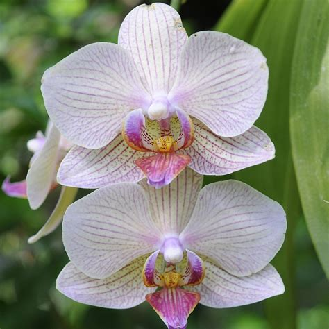 repotting orchids part 1 phalaenopsis my chicago