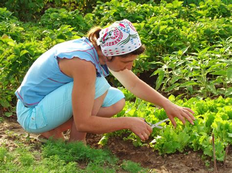 Gardening Techniques Where Did Organic Gardening Really Come From