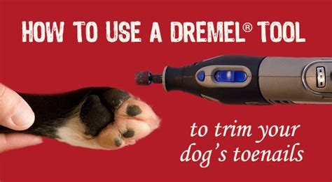 how to trim a s toenails how to use a dremel tool to trim your s toenails chasing tales