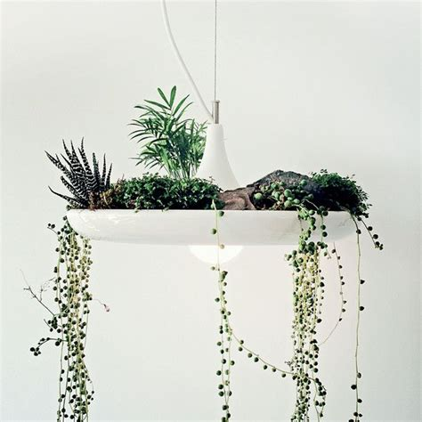 plants for bathrooms uk plants to complement your bathroom style livinghouse blog