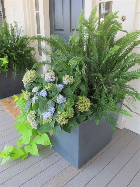 outdoor planter with ferns exteriors