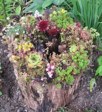 what to do with plant stump as christmas decoration outdoors a gift idea the garden professors