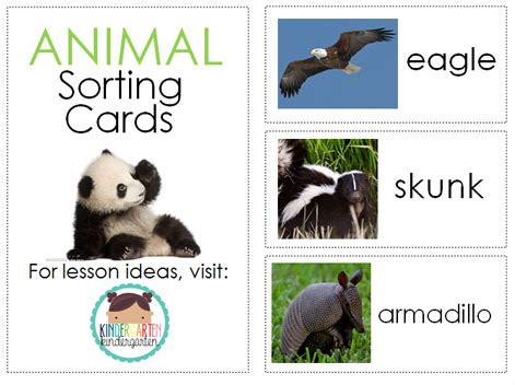 6 best images of zoo animal sorting card printables zoo there s a zoo in our room kindergarten kindergarten