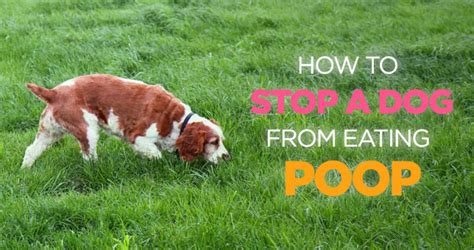 how to stop a from pooping in the house spray to stop dogs from pooping in the house 28 images poops scoopthatpoop with