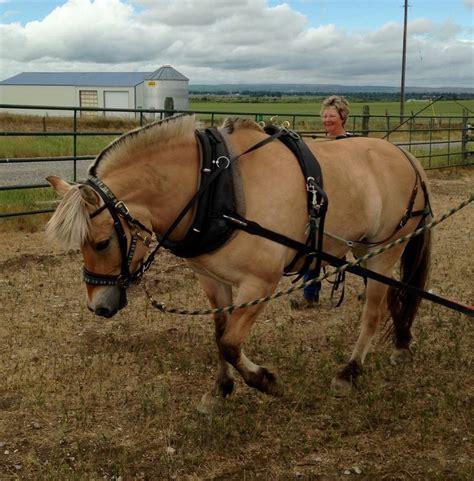 fjord jobs 1000 images about beloved fjords on pinterest horse