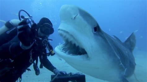 gopro shark gopro petting a tiger shark doovi