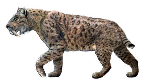 the jaguar tycoon books file smilodon fatalis jpg wikimedia commons