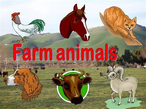 pembelajaran bahasa inggris farm animal