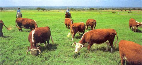 Rancher Home Ranching The Lbj Way Lyndon B Johnson National
