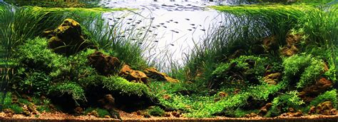 Ada Aquascaping Contest by Brazil S Ascension To The Aquascaping World Stage Scapefu