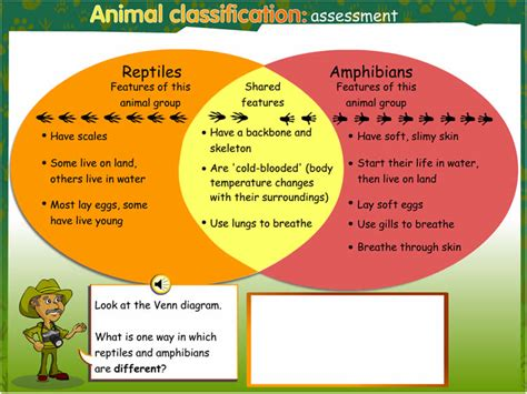 venn diagram of reptiles and hibians animal classification assessment guide