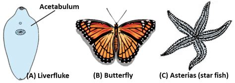 ncert class  science solutions chapter  diversity  living organisms part  flexiprep