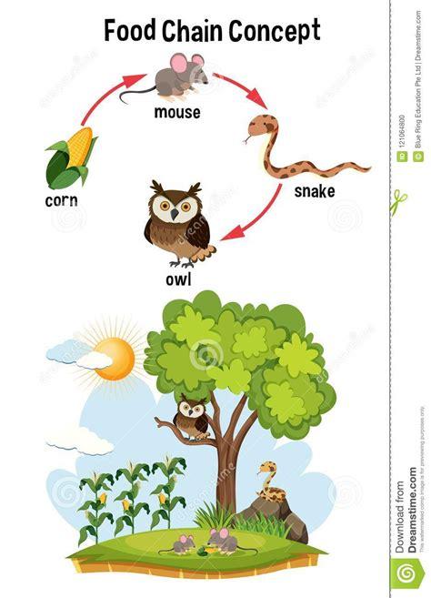 cadenas alimenticias concepto concepto de la cadena alimentaria de la ciencia