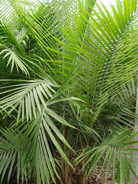 foliage plants 14 potted plant tropical foliage plants inc