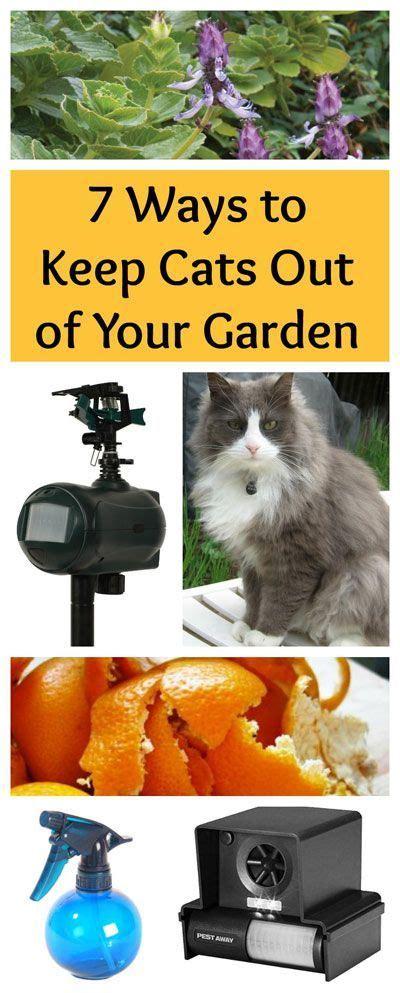 ways   cats    garden garden pests