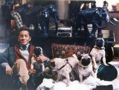 valentino and his pugs 1000 images about they pugs on pug and gerard butler