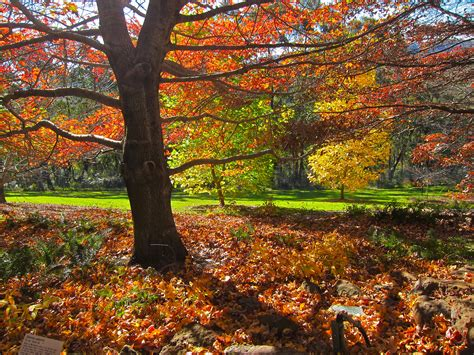 autumn garden where to see the best autumn tree displays in the blue