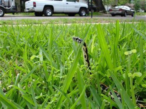 Garden Snake Habitat Garter Snake Habitat All About Snake World Snake
