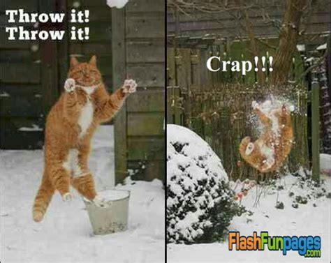 Cat Fight Meme - funny winter pictures ecards for facebook