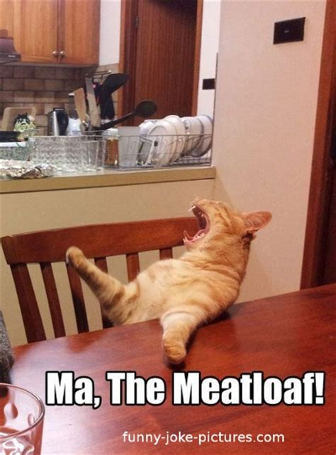 Meatloaf Meme - ma the meatloaf cat meme funny joke pictures