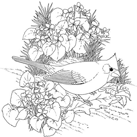 printable flowers and birds printable coloring pages girls flowers colorings net