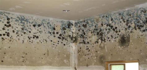 can smoke in carpet make you sick the silent killer detecting preventing mold in your home