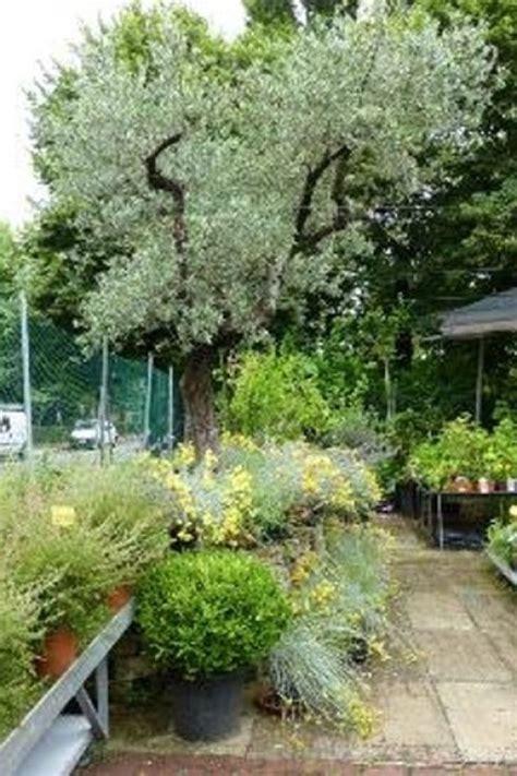 alberi da giardino piccolo alberi da giardino piccolo cool giardino con pensilina