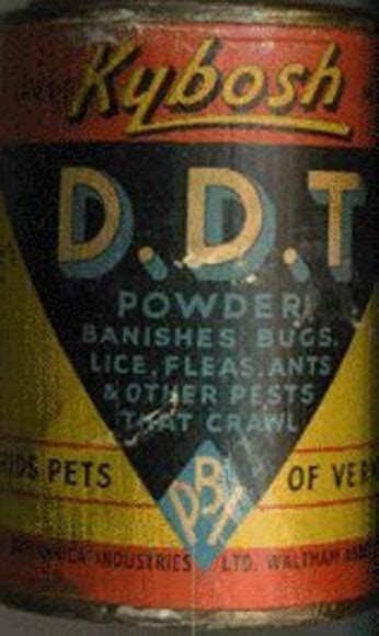 Ddt Bed Bugs by Bed Bugs Bed Bug Bites Australia