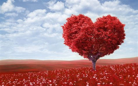 Images Of Love Tree | love tree hd wallpaper love valentine wallpapers