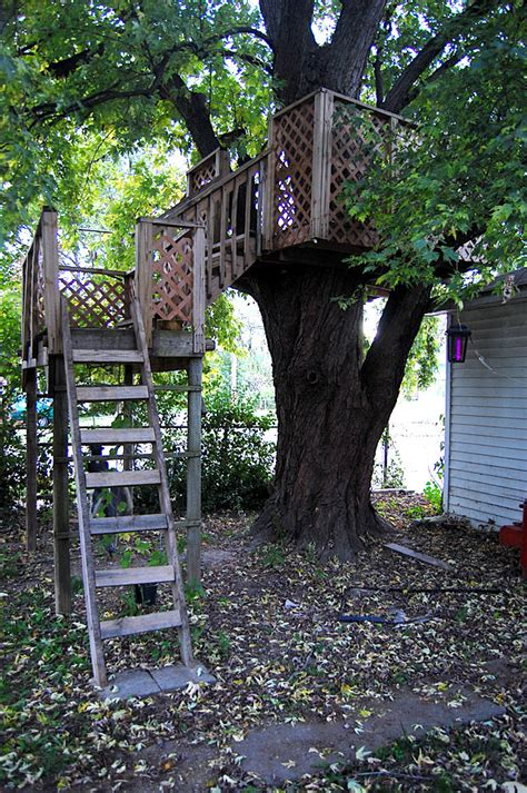 the treehouse 171 cape girardeau history and photos